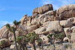 Paesaggio di Joshua Tree National Park Desert Fotografia Stock Libera da Diritti