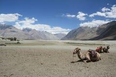 Paesaggio di Ladakh Immagini Stock Libere da Diritti