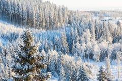 Paesaggio di legni di inverno Immagine Stock Libera da Diritti