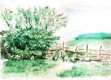 Paesaggio di legno della natura della foresta del campo della campagna dell'acquerello Fotografia Stock