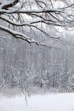 Paesaggio di legno della neve della neve di inverno fotografie stock