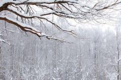 Paesaggio di legno della neve di inverno immagini stock