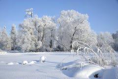 Paesaggio di legno in inverno Fotografia Stock