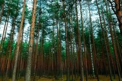 Paesaggio di legno, l'autunno tardo Fotografie Stock Libere da Diritti
