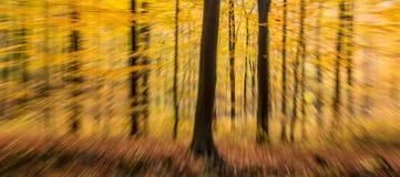 Paesaggio di legno di moto della sfuocatura dell'estratto della foresta di autunno fotografia stock