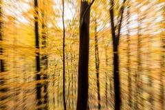 Paesaggio di legno di moto della sfuocatura dell'estratto della foresta di autunno immagini stock libere da diritti