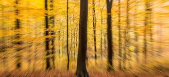 Paesaggio di legno di moto della sfuocatura dell'estratto della foresta di autunno fotografie stock