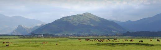 Paesaggio di Lingua gallese Galles Fotografie Stock
