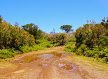 Paesaggio di Madeira Immagini Stock