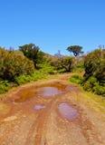 Paesaggio di Madeira Fotografia Stock Libera da Diritti