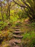 Paesaggio di Madeira Immagine Stock Libera da Diritti