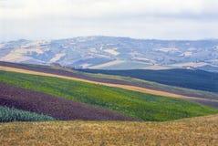 Paesaggio di Marche Fotografia Stock Libera da Diritti