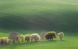 Paesaggio di minimalismo di Narural di verde e del overloo degli alberi del fiore Immagine Stock