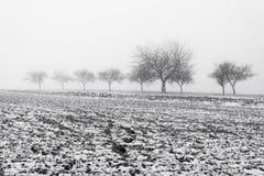 Paesaggio di Minimalistic con gli alberi nel campo su foschia nevosa Fotografia Stock Libera da Diritti