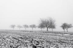 Paesaggio di Minimalistic con gli alberi nel campo su foschia nevosa Immagine Stock