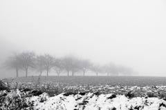 Paesaggio di Minimalistic con gli alberi nel campo su foschia nevosa Immagine Stock Libera da Diritti