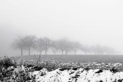 Paesaggio di Minimalistic con gli alberi nel campo su foschia nevosa Immagini Stock
