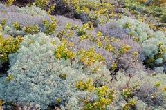 Paesaggio di muschio Fotografia Stock