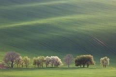 Paesaggio di Narural di verde e degli alberi del fiore che trascurano rotolamento Immagine Stock Libera da Diritti
