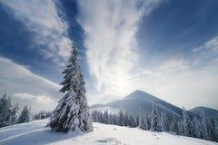 Paesaggio di Natale con l'abete rosso nelle montagne Fotografia Stock Libera da Diritti