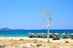 Paesaggio di Naxos vicino al mare, spiaggia con gli ombrelli ed albero bianco Immagine Stock