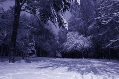 Paesaggio di notte di inverno fotografia stock libera da diritti