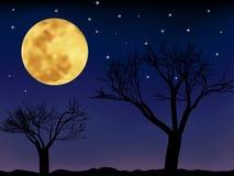 Paesaggio di notte di vettore Immagine Stock