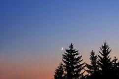 Paesaggio di notte, siluette degli abeti Fotografia Stock Libera da Diritti