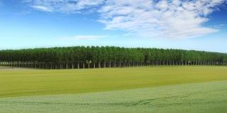 Paesaggio di panorama della natura, campo coltivato, prato ed alberi Immagini Stock Libere da Diritti