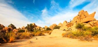 Paesaggio di panorama della valle nascosta nell'albero di Joshua Fotografie Stock