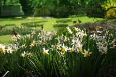 Paesaggio di Pasqua Immagine Stock