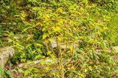Paesaggio di piccolo albero con le foglie che cambiano colore Fotografia Stock