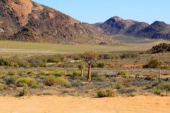 Paesaggio di pietra del deserto Immagine Stock Libera da Diritti