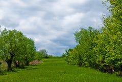 Paesaggio di primavera Fotografia Stock