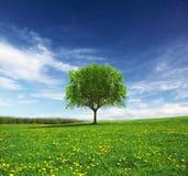 Paesaggio di primavera Immagine Stock