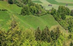 Paesaggio di primavera nel cantone svizzero del Canton Nidvaldo Immagini Stock Libere da Diritti