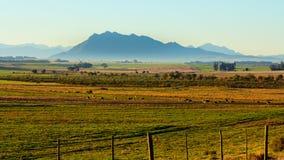 Paesaggio di primo mattino di terreno coltivabile, delle pecore e della montagna Immagine Stock Libera da Diritti