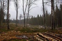 Paesaggio di pulizia della foresta fotografia stock