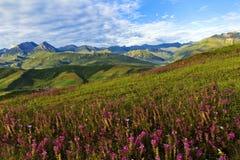 Paesaggio di Qinghai Fotografie Stock Libere da Diritti