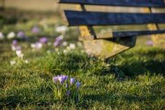 Paesaggio di rilassamento della primavera Immagine Stock