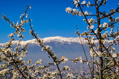 Paesaggio di Santiago Immagine Stock