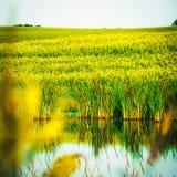 Paesaggio di Sask Immagine Stock