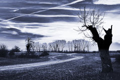 Paesaggio di sera Fotografia Stock