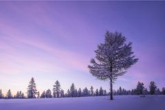 Paesaggio di sera di inverno con l'albero fotografie stock libere da diritti