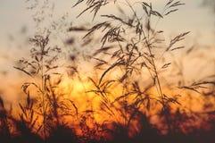 Paesaggio di sera di estate Fotografia Stock
