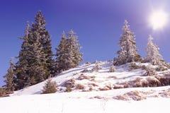 Paesaggio di Snowy con gli alberi sopra la collina Fotografie Stock Libere da Diritti