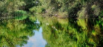 Paesaggio di stupore con gli uccelli nel delta di Danubio fotografia stock libera da diritti