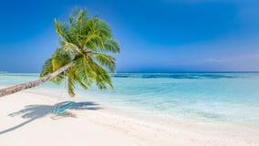 Paesaggio di stupore, palma con oscillazione sopra il mare blu calmo, paesaggio tropicale di viaggio Concetto di vacanze estive immagine stock libera da diritti