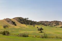Paesaggio di tempo di molla del Cipro Immagini Stock