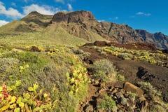 Paesaggio di Tenerife con i cespugli e le montagne spinosi fotografia stock libera da diritti